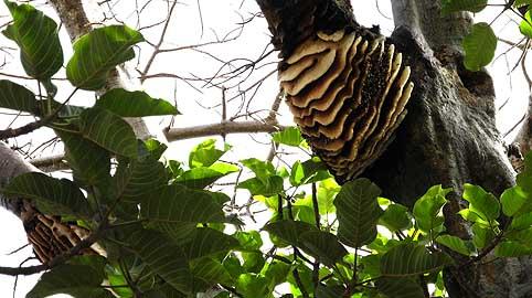 einzelne biene baut nest